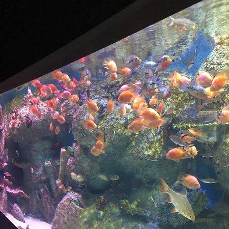 Isfahan Province, Iran: Aquarium