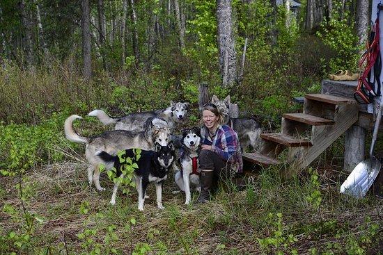 Intimt besøk av en Alaskan off-grid Homestead med Sled Dogs