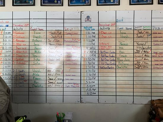Live dive board for the day.
