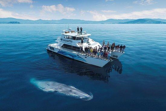 Auckland Delphin und Bootstour zur...