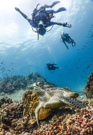 upside down with a sea turtle