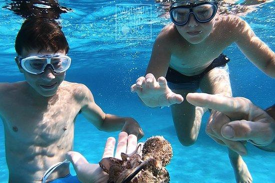 Sightseeing & snorkelen Boottochten