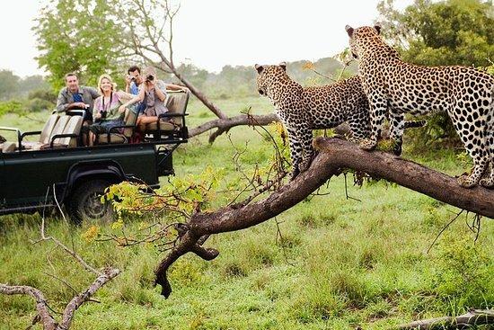 Privé Safari Tours