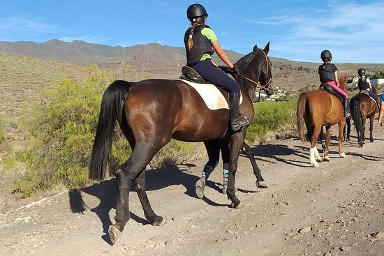 Exclusive horse ride