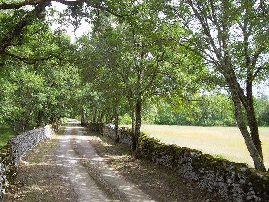 Varaire, France : Chemin d'arrivée du château de Couanac bordé de ses ancêstrals murs en pierres sèches