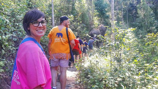 Full Day Elephant Sanctuary at Blue Tao Elephant Village ( Forest walk to S Frame Waterfall ).
