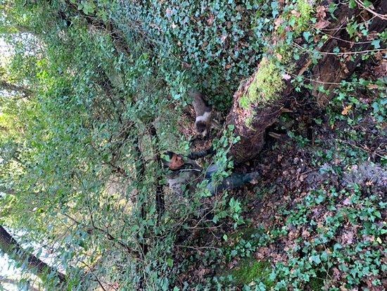 Siena truffel-jachtervaring Foto
