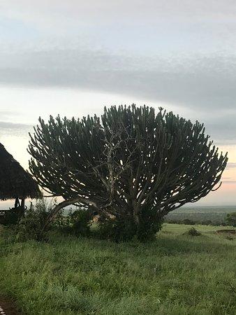 Lualenyi Camp