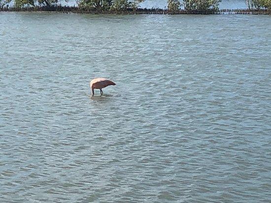 Flamingo at Jan Kok