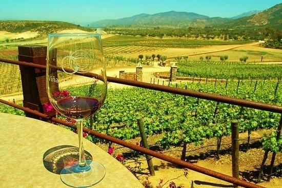 沿着葡萄酒之路,品尝全球获奖的葡萄酒及其美食!