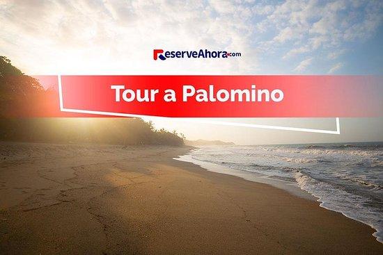 Tour Palomino