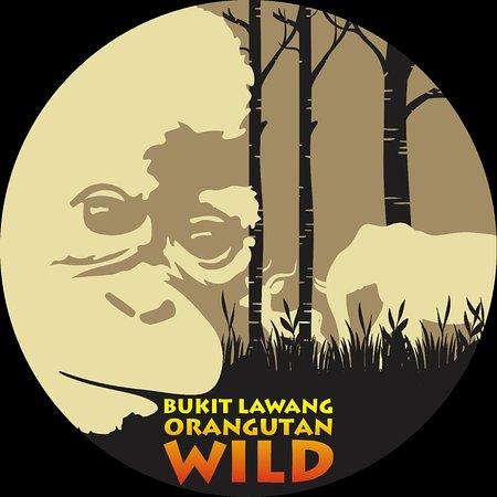 Bukit Lawang Orangutan Wild