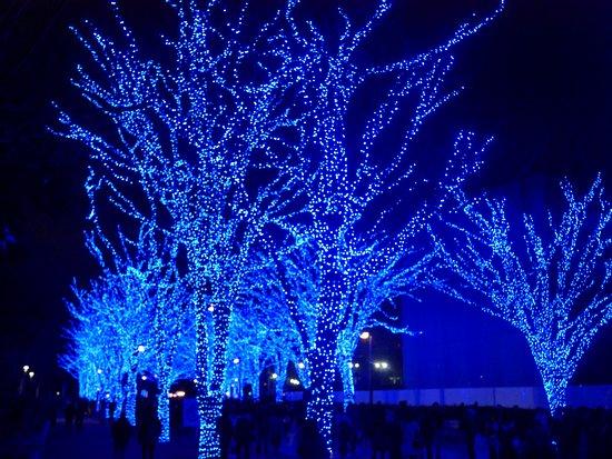 blue cave shibuya yoyogi park15