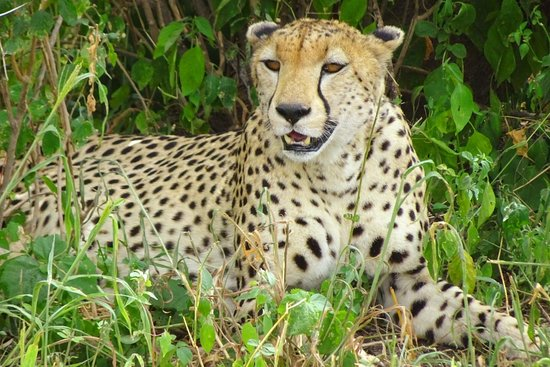 Enjipai Safari