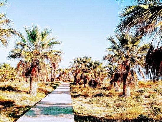 מחוז ולנסיה, ספרד: Paseo junto al mar Mediterráneo