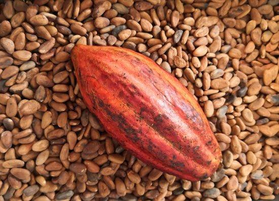 Pasion De Cacao