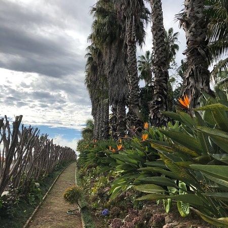 Valokuva: Funchal