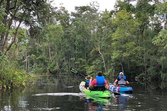 Kayak autoguidato: vera avventura in Florida