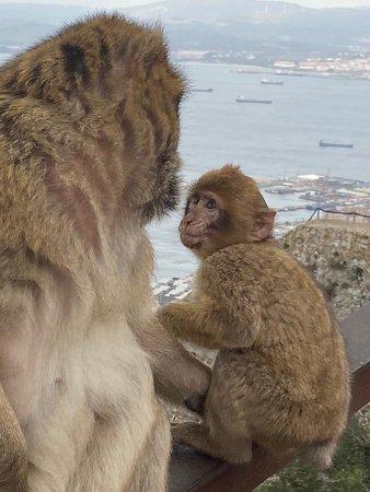 Apes Den