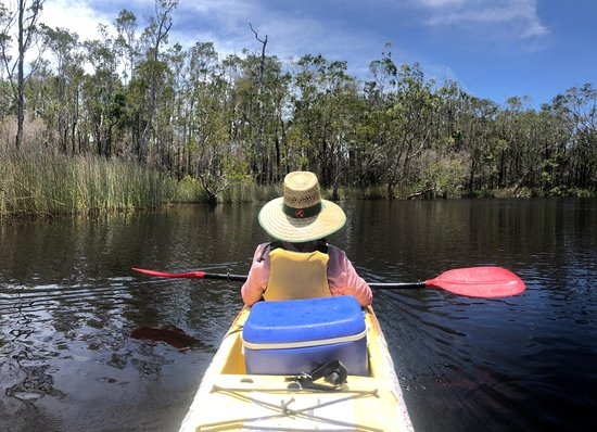Self-Guided Noosa Everglades Kayak Tour: Taking in the beautiful surrounds and quiet