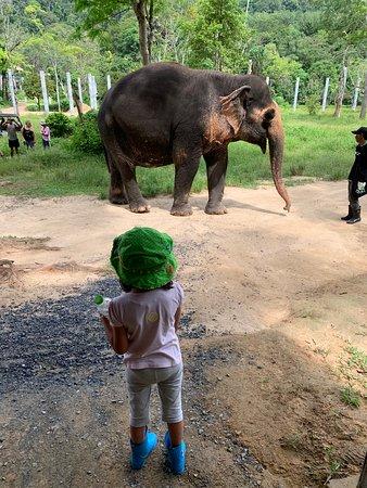 Una mañana con los elefantes en el santuario de elefantes de Phuket: A Morning with the Elephants at Phuket Elephant Sanctuary