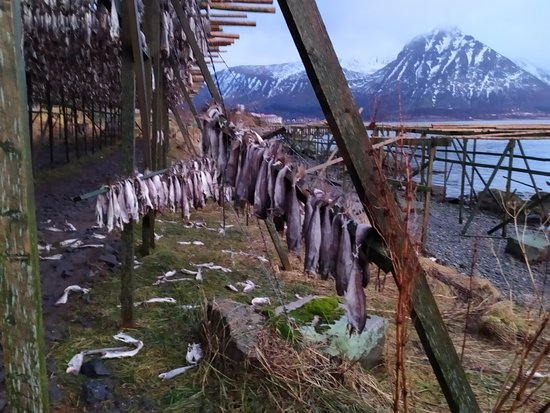 Winter Full-Day Guided Tour of the Lofoten Islands: Stoccafissi in essicazione