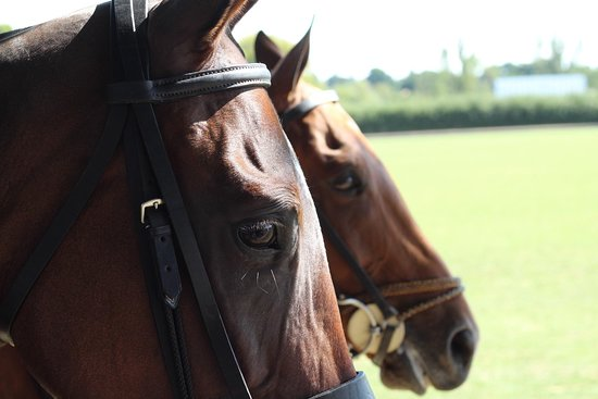 Horseback riding and Polo Madrid