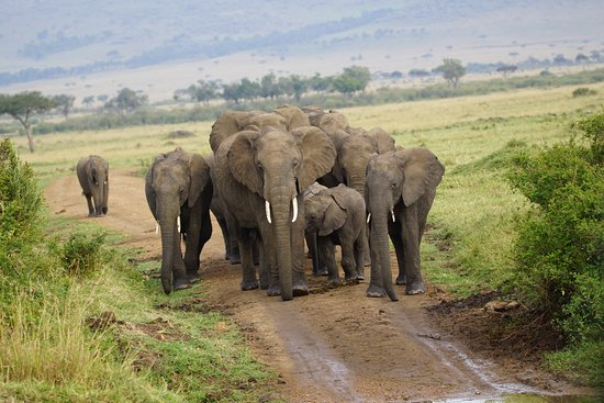 Elephants blocking the road always take priority!