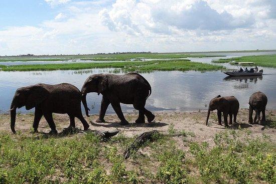 Safari a pie en el Parque Nacional...