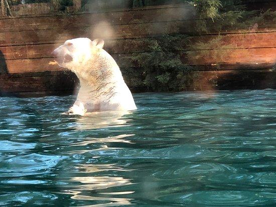 Superbe Zoo