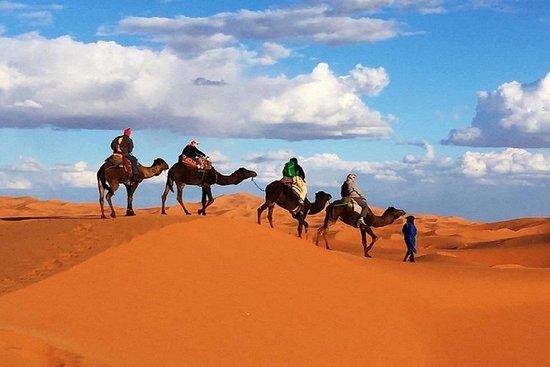 Camp Camel Trekking