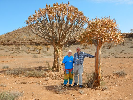 Travelers in Quiver Tree forest