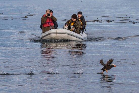 Fotografías de Geographic Marine Expeditions (GMX) Katmai Bear Viewing - Fotos de Isla Kodiak - Tripadvisor