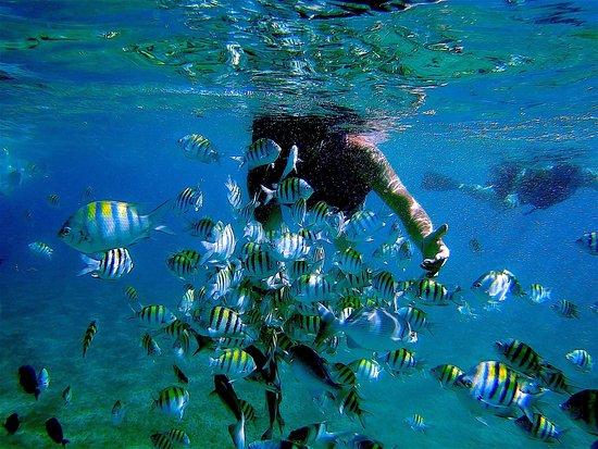 Aqua Center Water Sports & Dive Center
