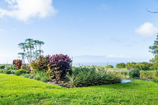 Bilde fra Hawi