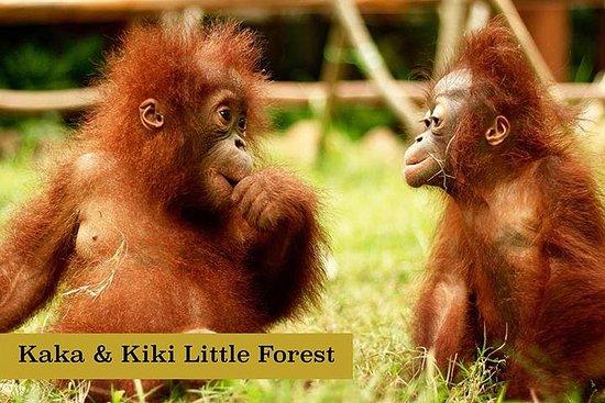 Billet coupe-file: billet pour le parc animalier de Lombok