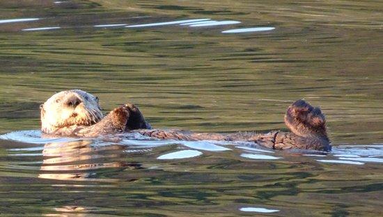 Saw so many sea otters