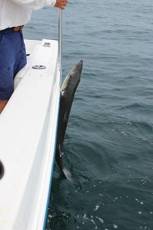 Liquid Asset Fishing Charters