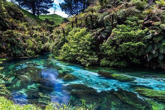 Redwood Forest, Blue Springs & Huka Falls Day Tour fra Auckland