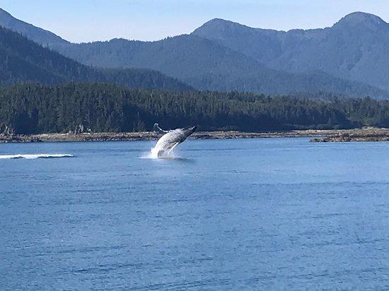 Regatta: Whale watching at Hoonah
