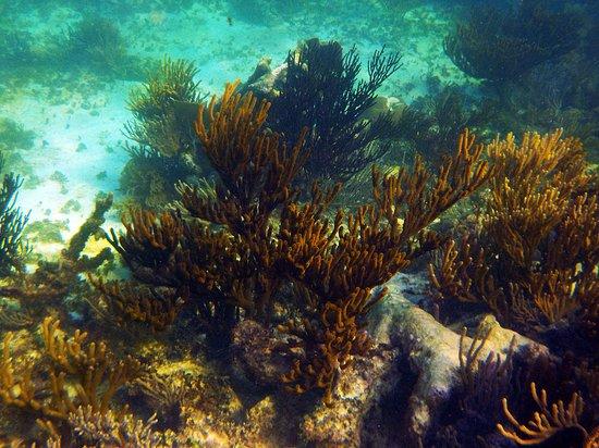 Tulum Dive and Snorkel 4