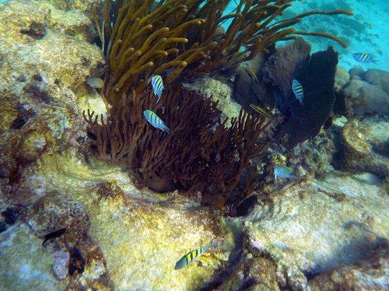 Tulum Dive and Snorkel 5