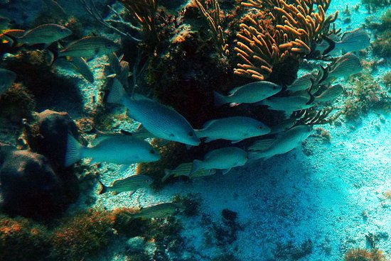 Tulum Dive and Snorkel 6