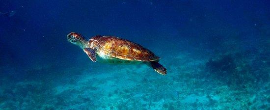 Tulum Dive and Snorkel 11