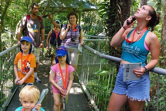 Daintree Discovery Centre Family Pass Ticket