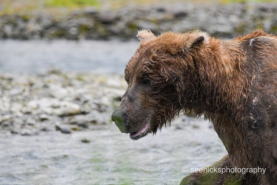 Close encounter of the Bear kind