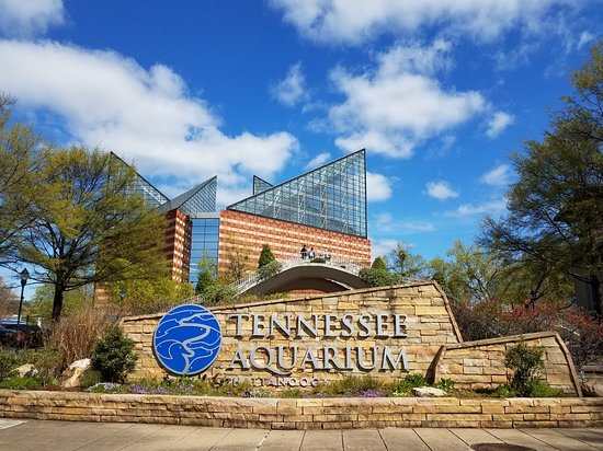 Tennessee Aquarium (Chattanooga) - 2020 All You Need to ...