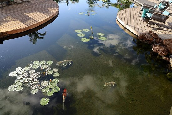 A closer view of the koi ponds on the grounds
