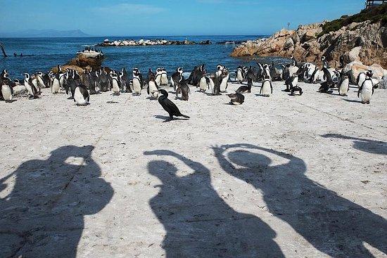 Cabo de Buena Esperanza y Pingüinos...