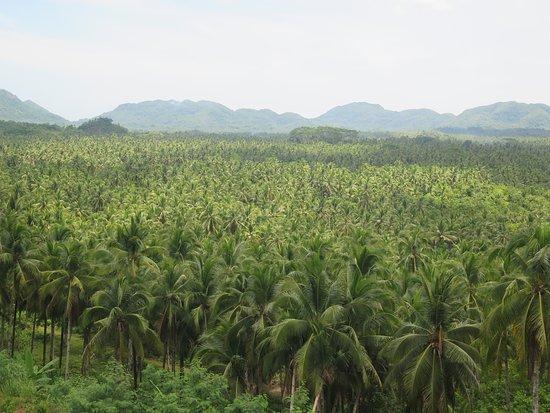 Dapa, Filippinerna: Coconut Trees View Deck